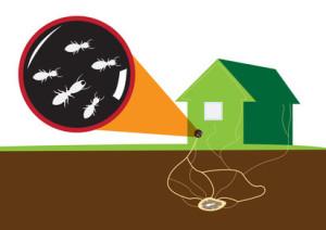 Ameisen-unter-Haus